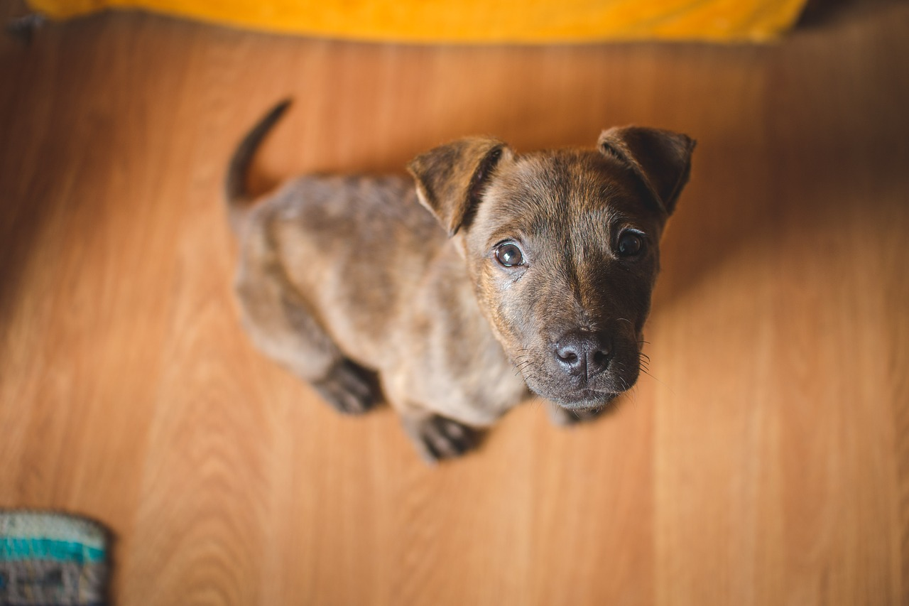 Puppy looking up.