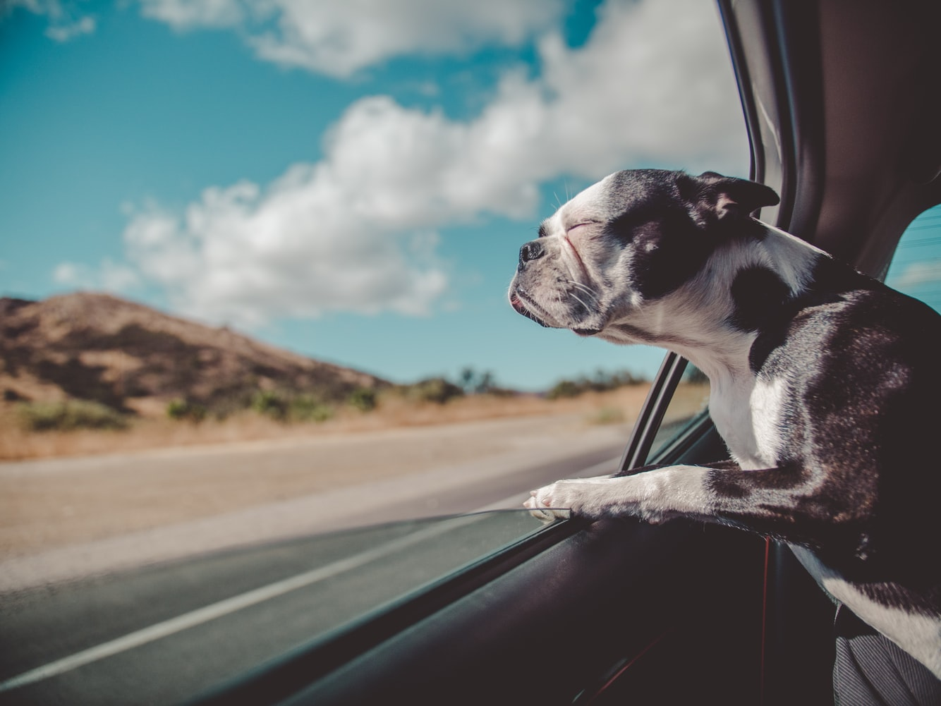 Dog closing his eyes with head out the window of the car