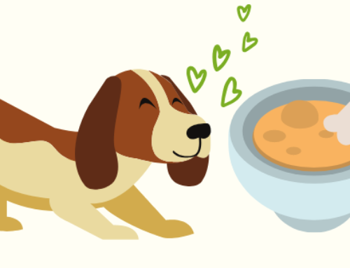 Bone Broth for Dogs: All The Benefits