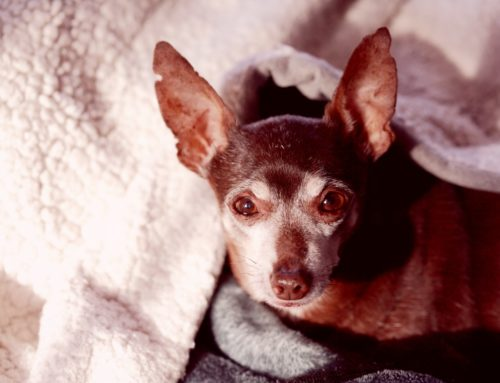 Senior Dog Checklist: What You Need for Your Aging Dog