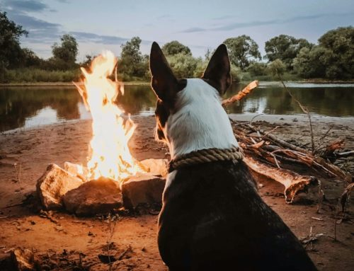 5 Fall Activities to Do with Your Dog
